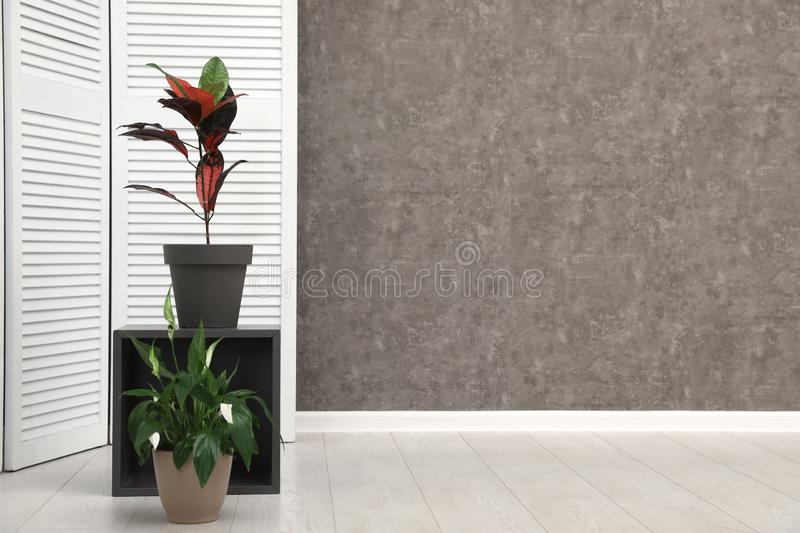 Room interior with indoor plants at grey wall. Trendy home decor stock photos