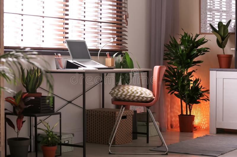 Room interior with  and different potted houseplants stock photography