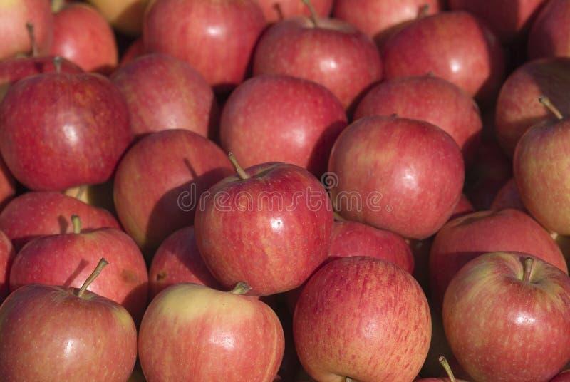 Rooskleurige rode appelen royalty-vrije stock foto
