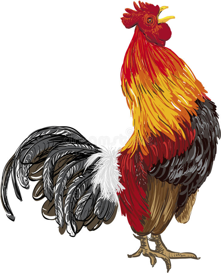 Rooster. Hand drawing vector illustration