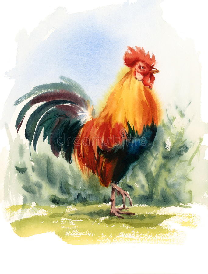 Rooster Bird Watercolor Illustration Hand Drawn royalty free illustration