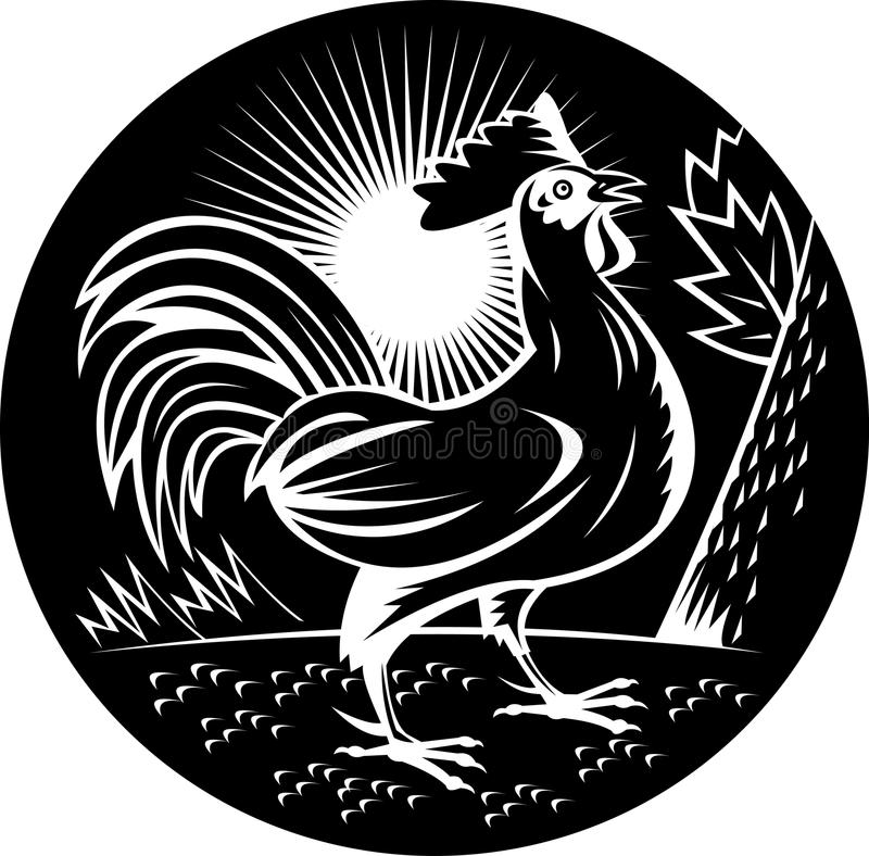 Rooster cockerel crowing. Illustration of a Rooster cockerel chicken crowing done in woodcut style and in black and white vector illustration