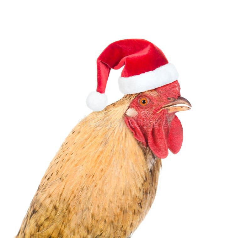 Rooster com chapéu vermelho de Papai Noel - símbolo do Ano Novo Chinês 2017 Isolado sobre fundo branco fotografia de stock