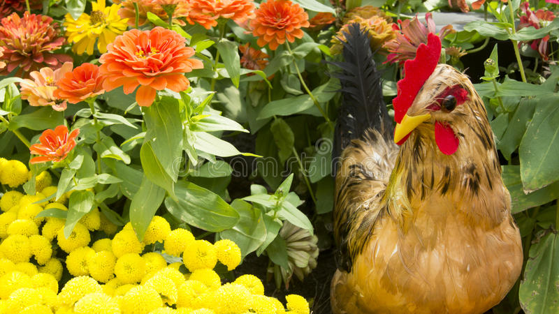 Rooster Falling In Love With Flowers In Autumn. royalty free stock photos