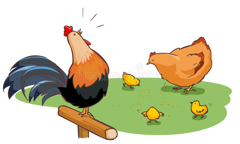 Rooster hen and chicks family on backyard. Illustration vector illustration