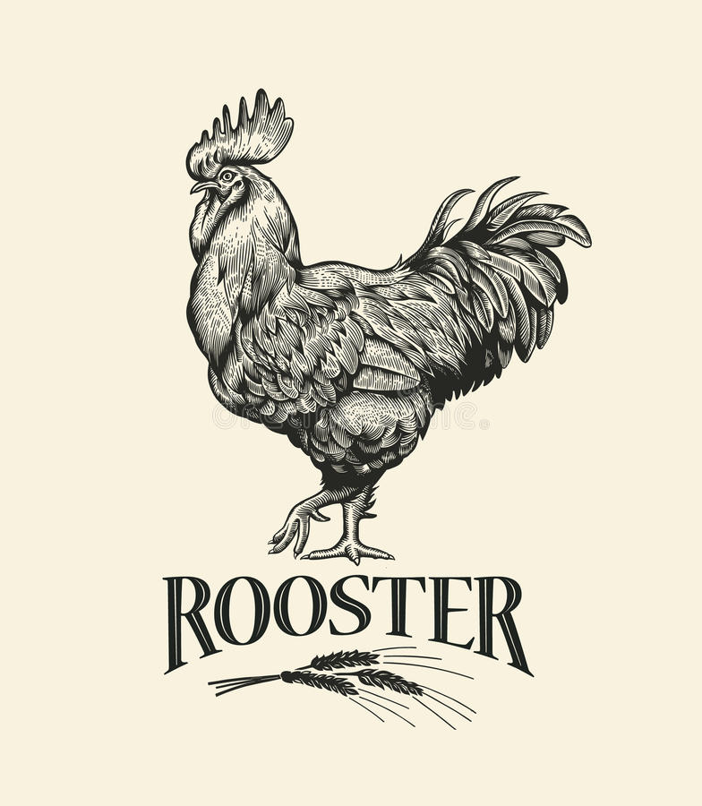 Rooster. Illustration of the in Vintage engraving style. Rooster grunge label. Sticker image for the farms and manufacturing depicting roster. Grunge label for stock illustration