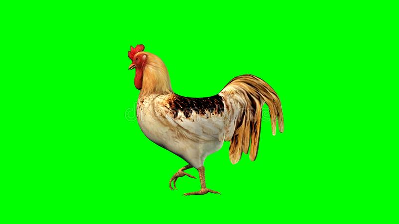 Rooster - isolated on green background stock illustration