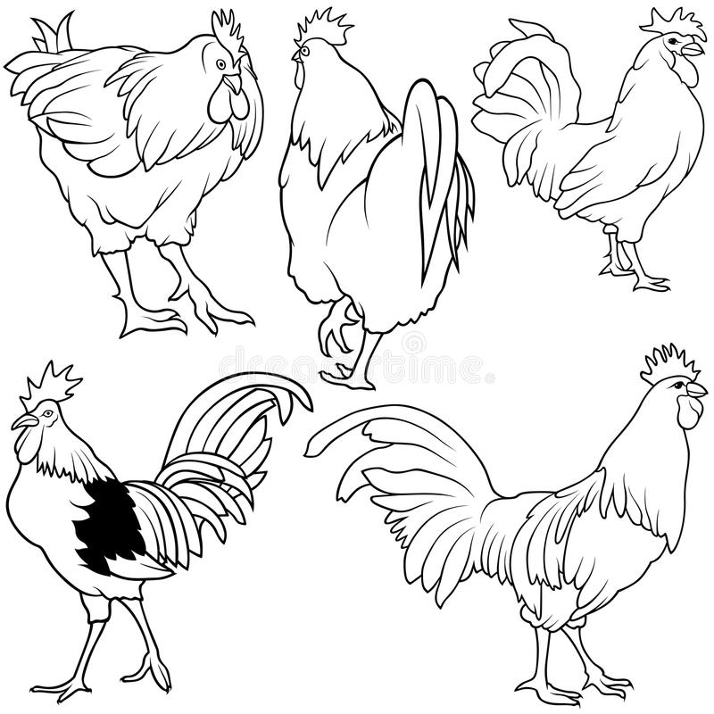 Rooster Set stock illustration