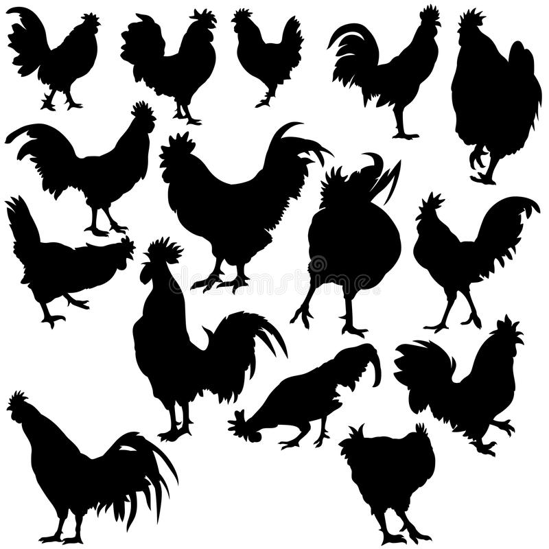 Rooster Silhouettes. Black hand drawn illustration as vector