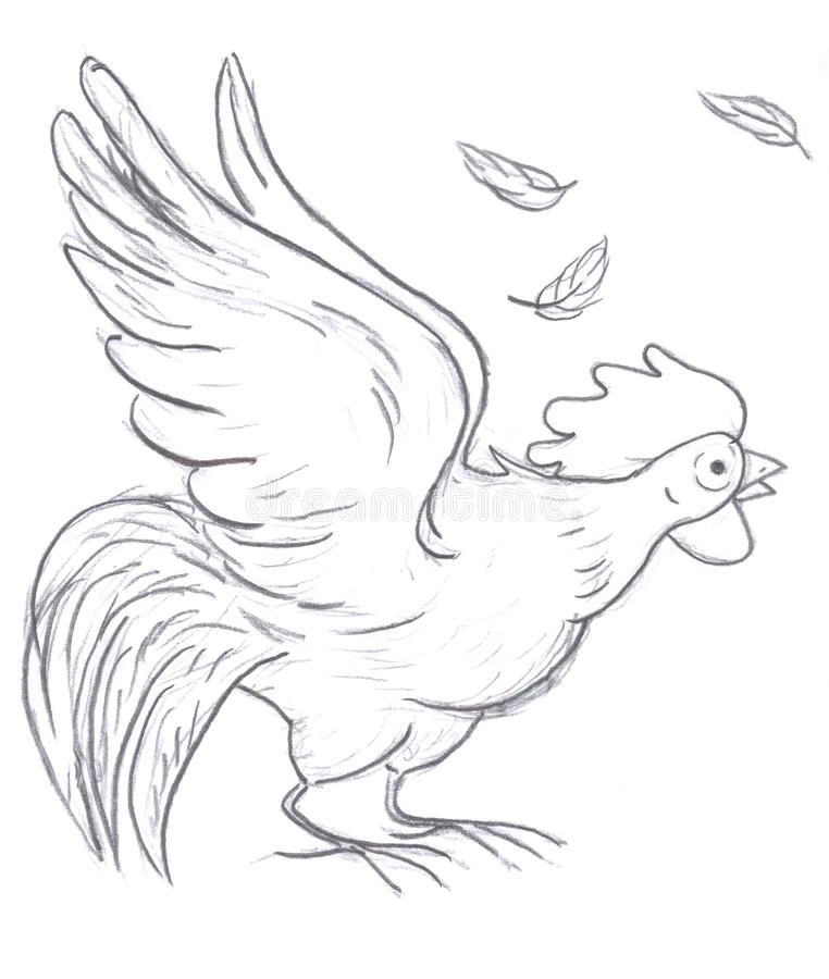 Download Rooster sketch stock illustration. Image of domestic - 12367785