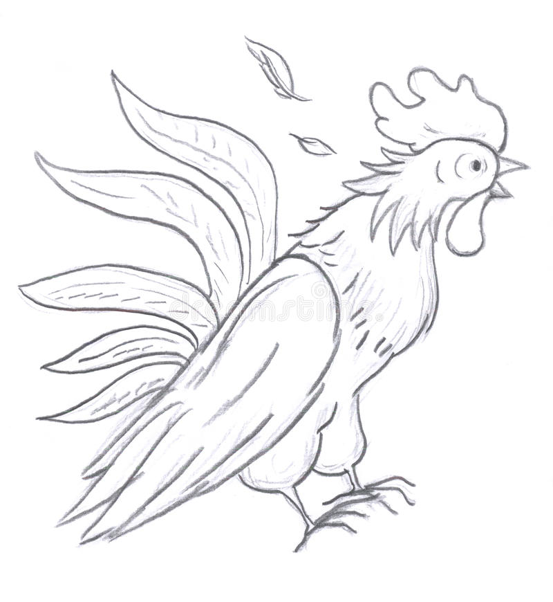 Download Rooster sketch stock illustration. Image of pencil, nature - 12367803