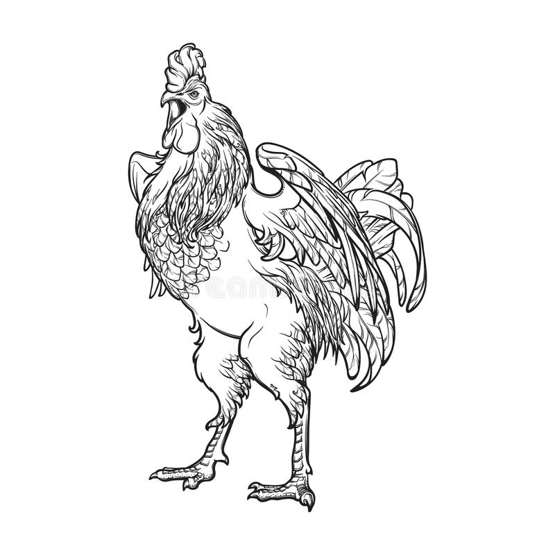 Rooster on white background vector illustration