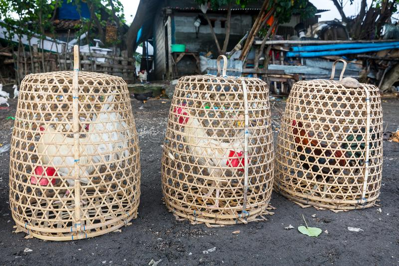 Roosters in cage. Made from weave bamboo in the village royalty free stock photo