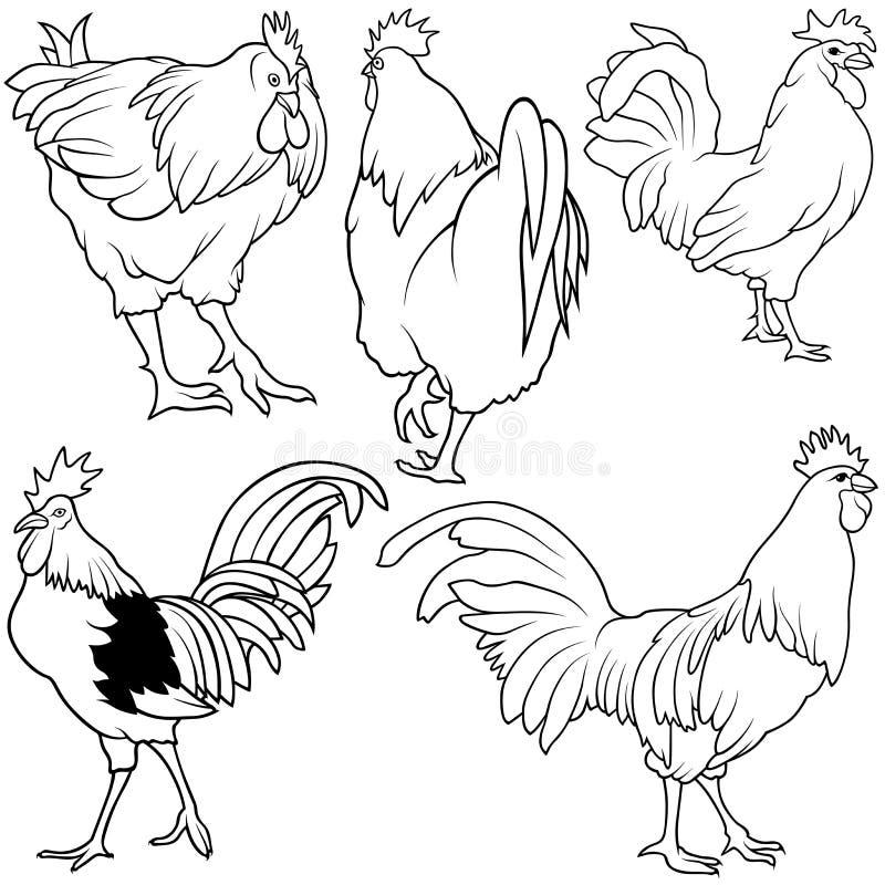 roosterset stock illustrationer