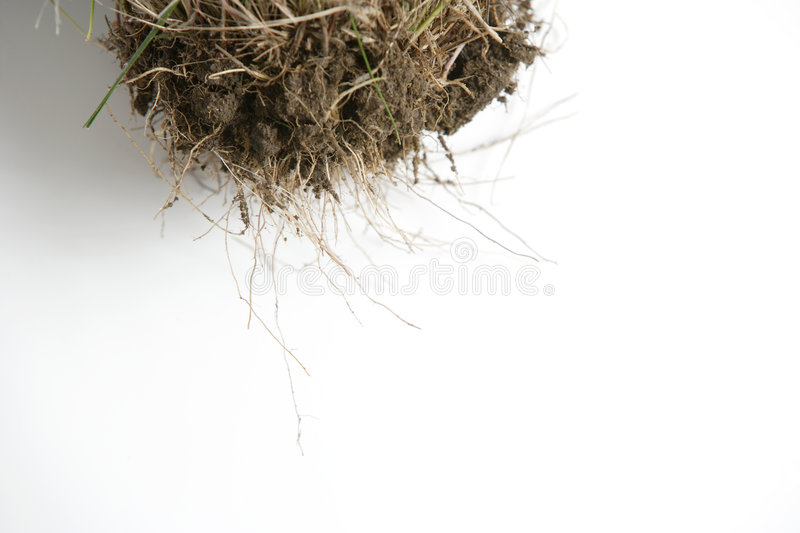 Download Root stock photo. Image of dirt, grow, bottom, grew, earth - 4642976