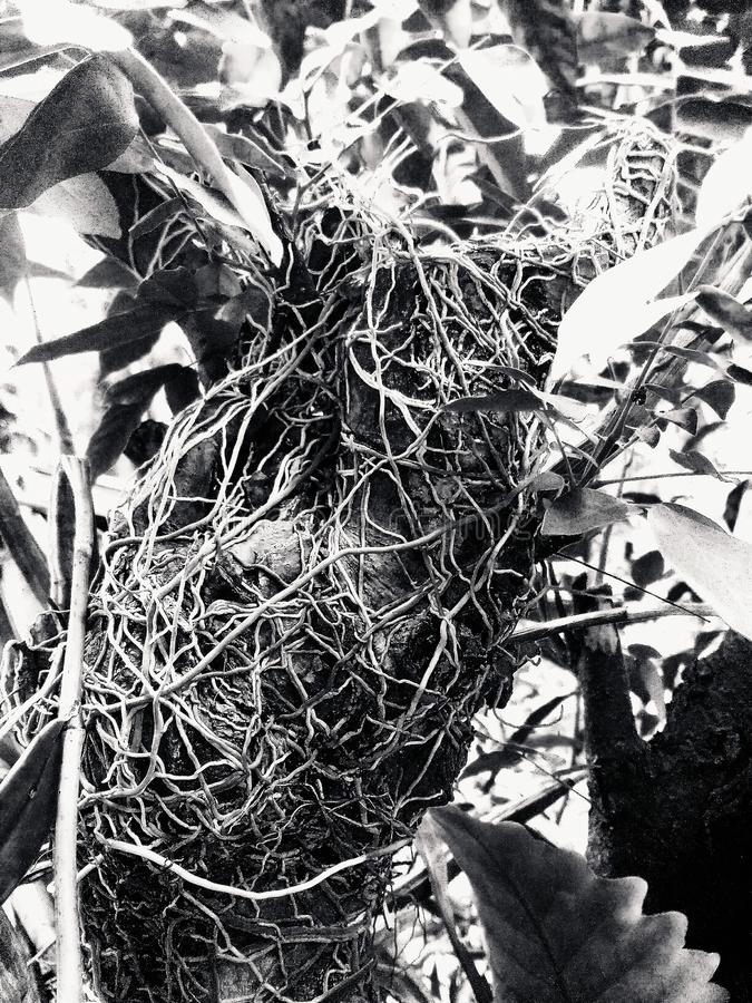 Root black tree texture nature stock image