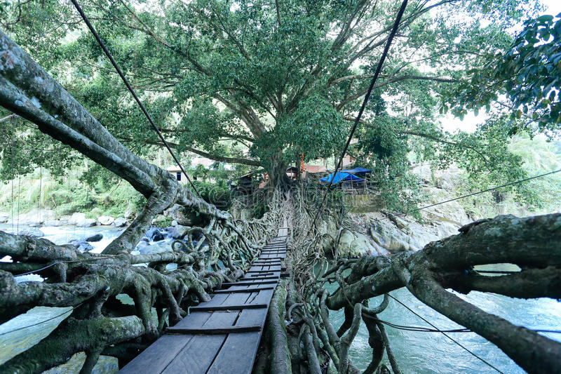 Root bridge village indonesia royalty free stock photo