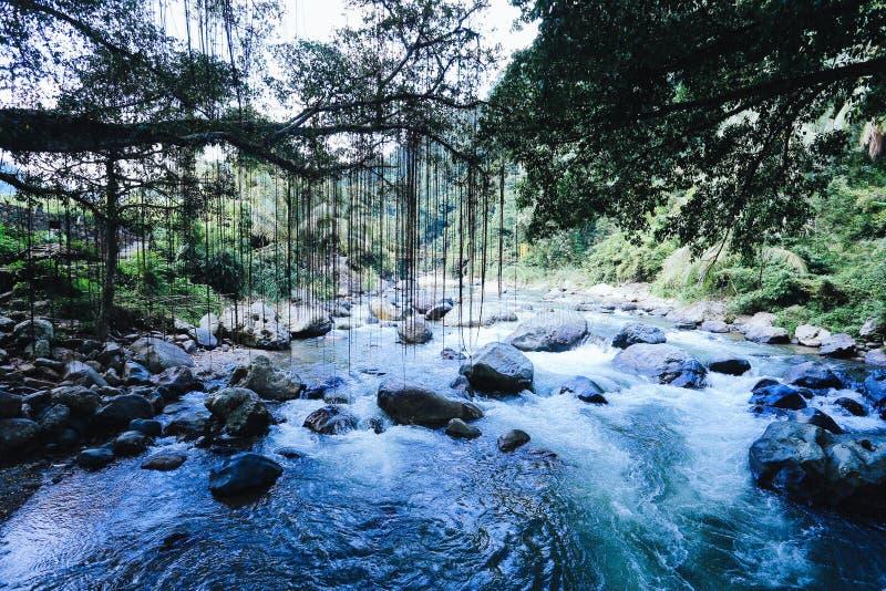 Root bridge village indonesia stock photo