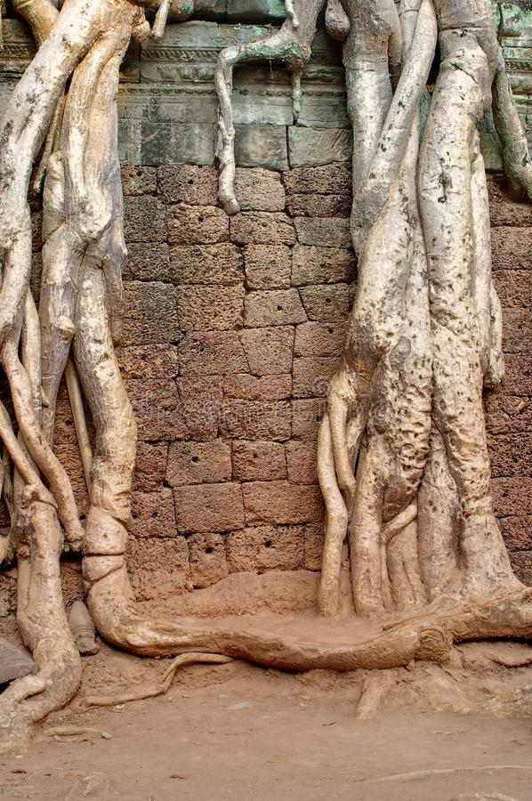Root drapped wall stock image