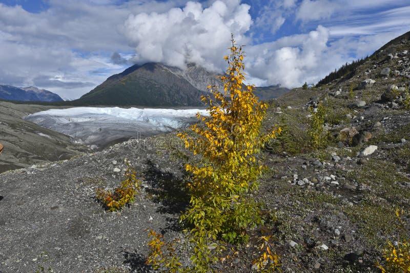 Root Glacier royalty free stock photo