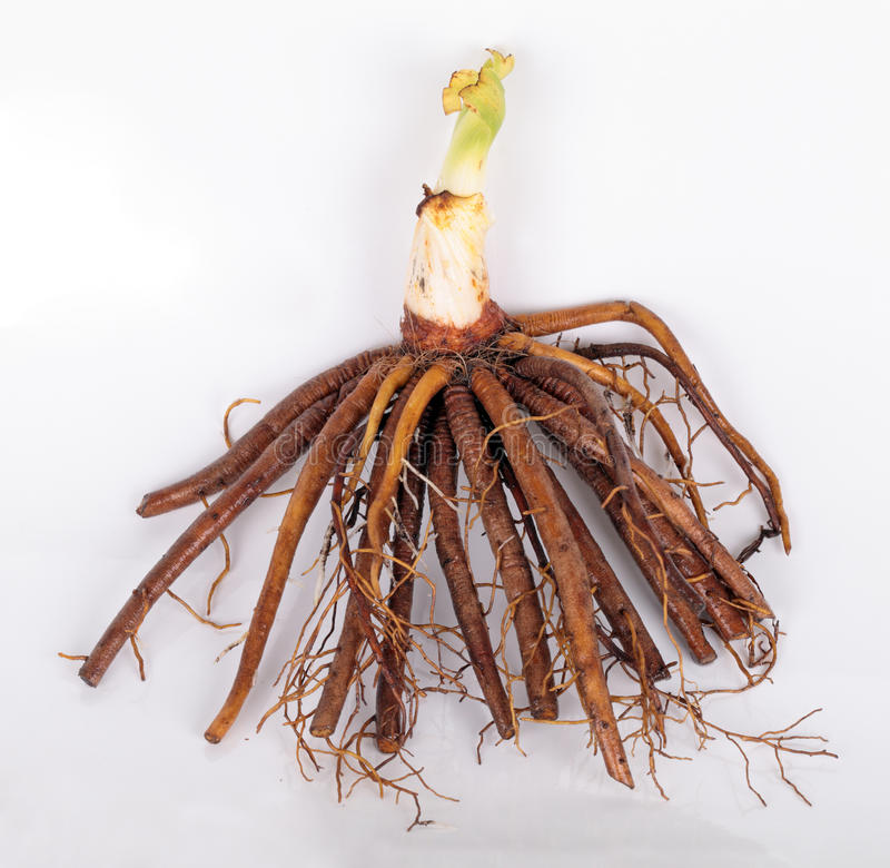 Rooted stock photo