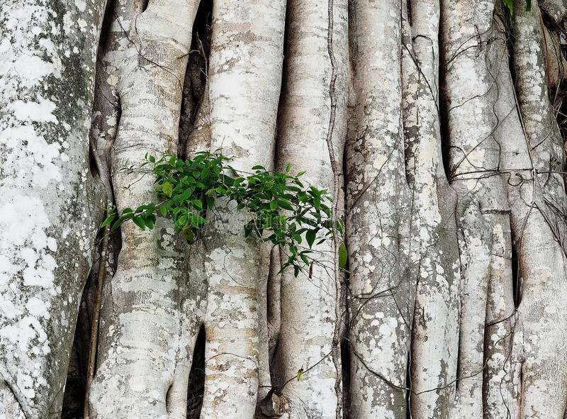 Root. A plant with longer root royalty free stock photography
