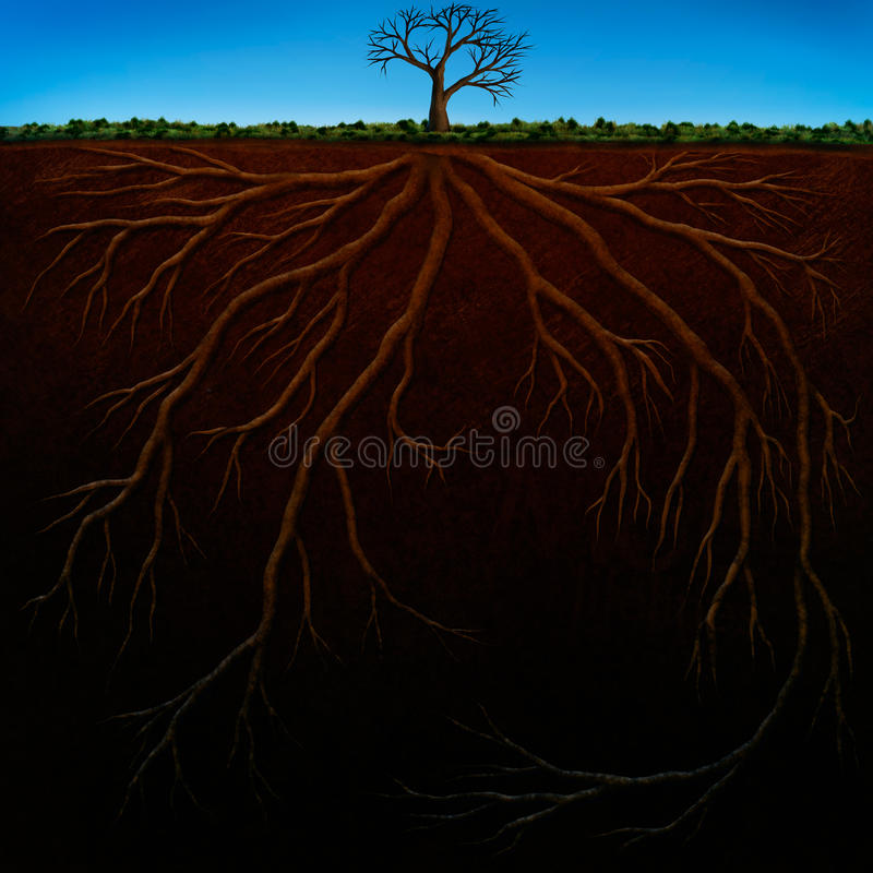 Download Root Structure Digital Painting Stock Illustration - Illustration of illustration, painting: 20025232