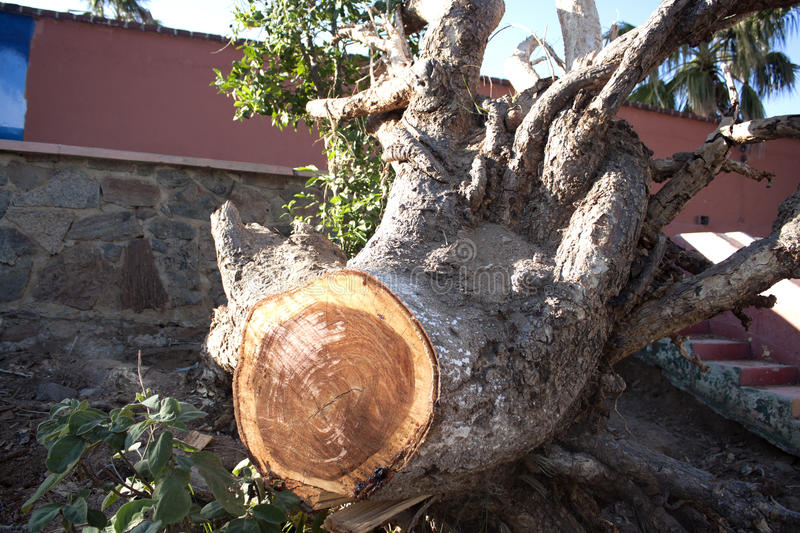 Root tree cut stock photography