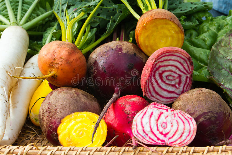 Root vegetables in basket. Variety of freshly harvested beets in a basket at a farmers market royalty free stock images