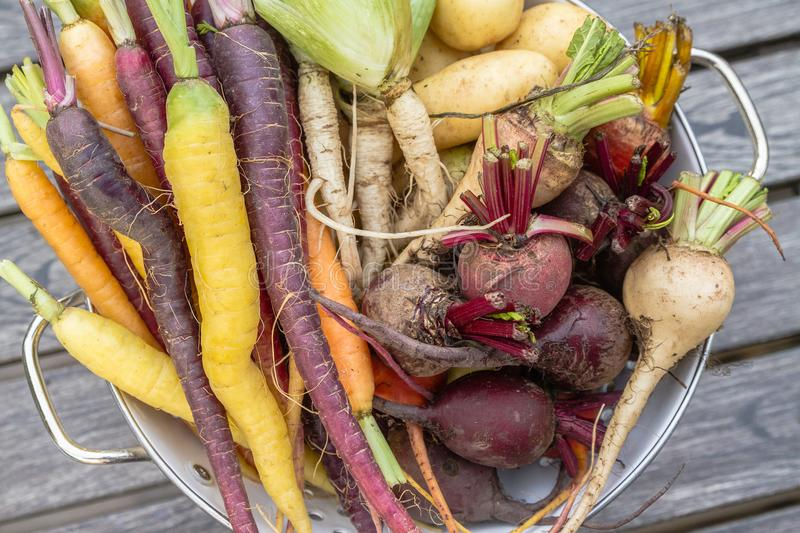 Root vegetables from the garden royalty free stock photos