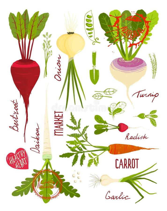 Root Vegetables with Greens Signs and Symbols. Market gardening colorful designer set illustration. Layered vector EPS8 royalty free illustration