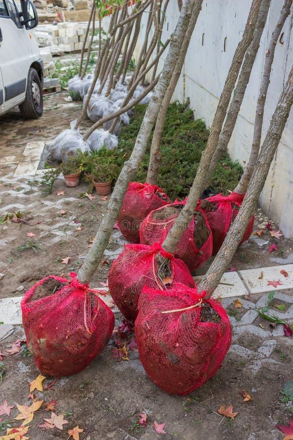 Rootball das plantas prontas para plantar foto de stock