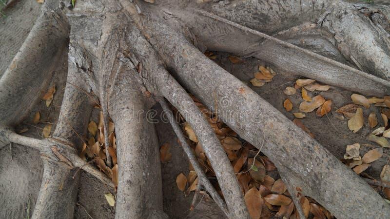 rooted stock afbeeldingen
