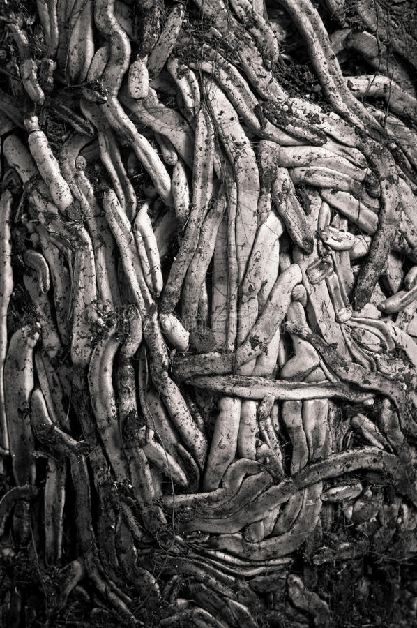 Download Roots stock image. Image of root, texture, potted, plants - 16271219