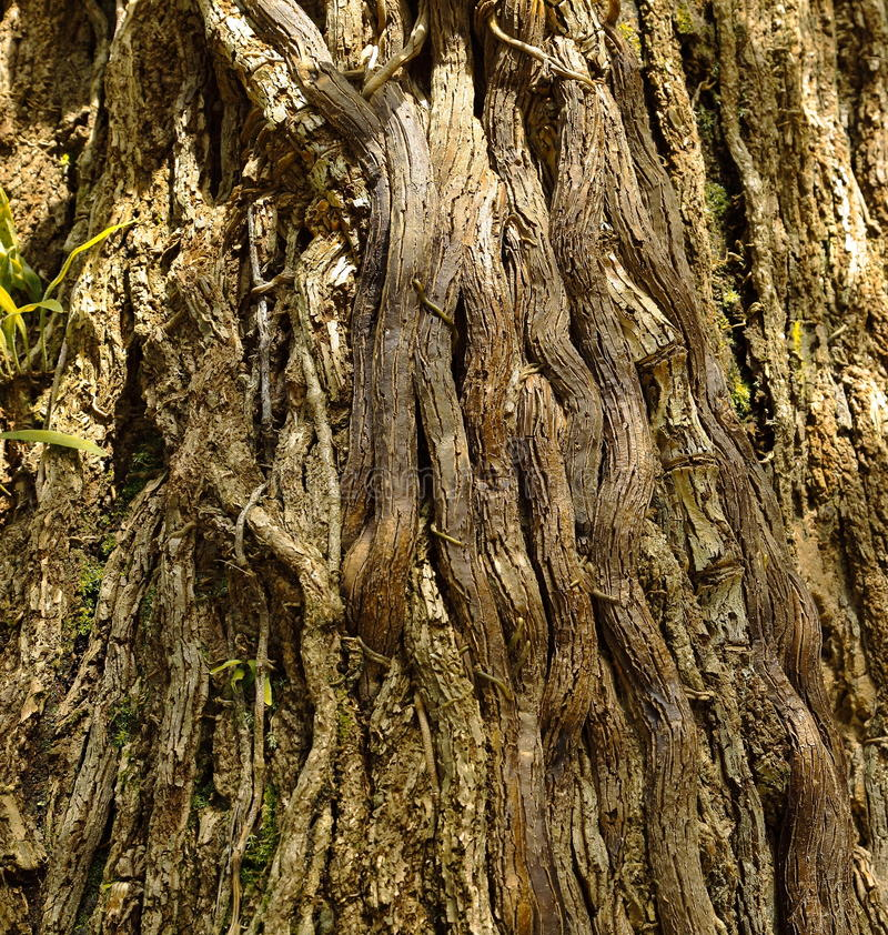 Download Roots. stock photo. Image of tree, wood, geology, nature - 26499020