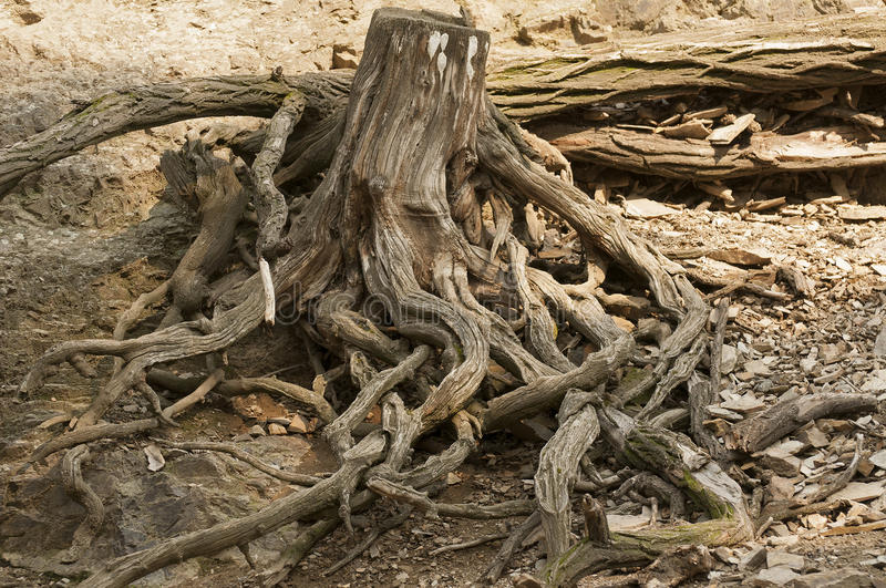 Download Roots Stock Images - Image: 26546634