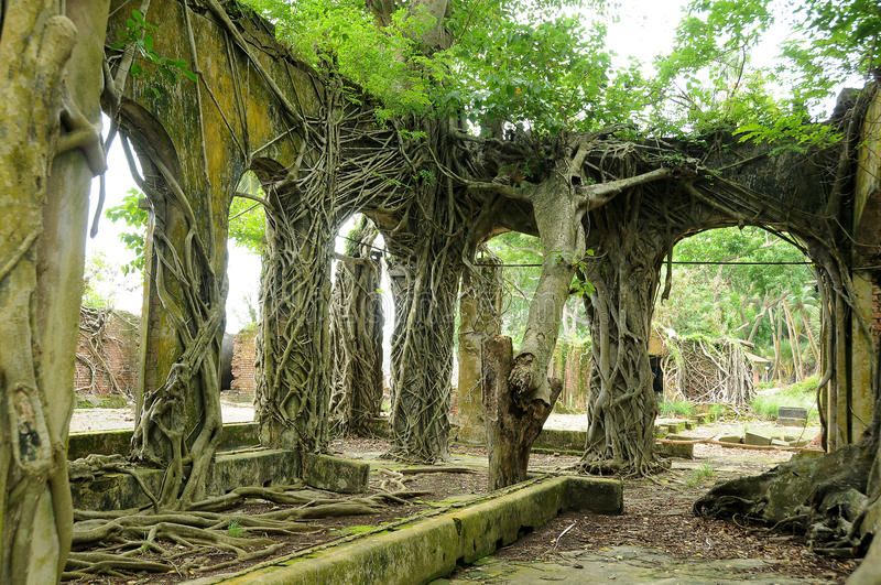 Roots on abandoned ancient wall royalty free stock photography