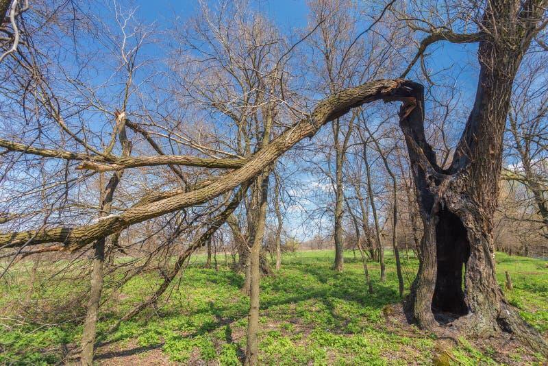Download Roots of the broken tree. stock image. Image of danger - 37906829