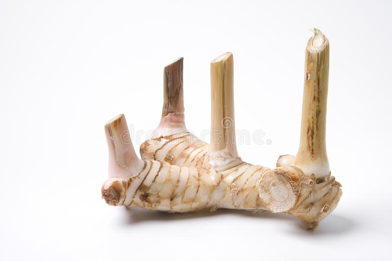 Download Roots of Chinese ginger stock image. Image of background - 10386905