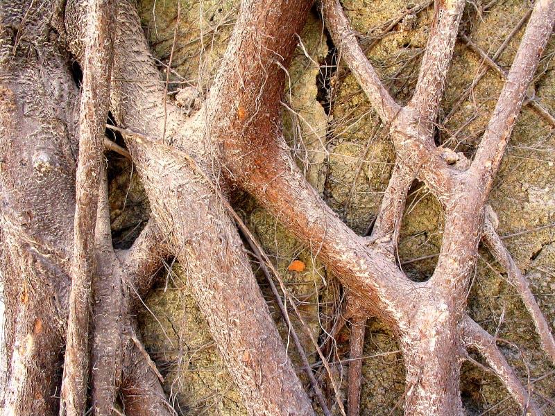 Download Roots Colour stock photo. Image of base, resist, survive - 77408