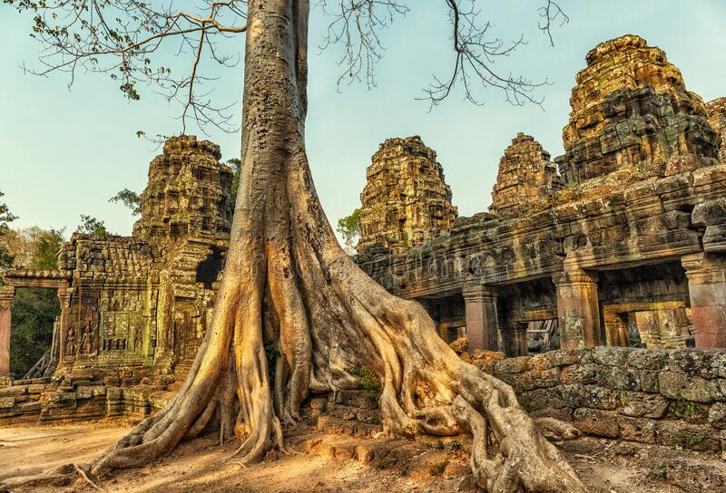 Roots covering the ruin of Ta Prohm temple royalty free stock images