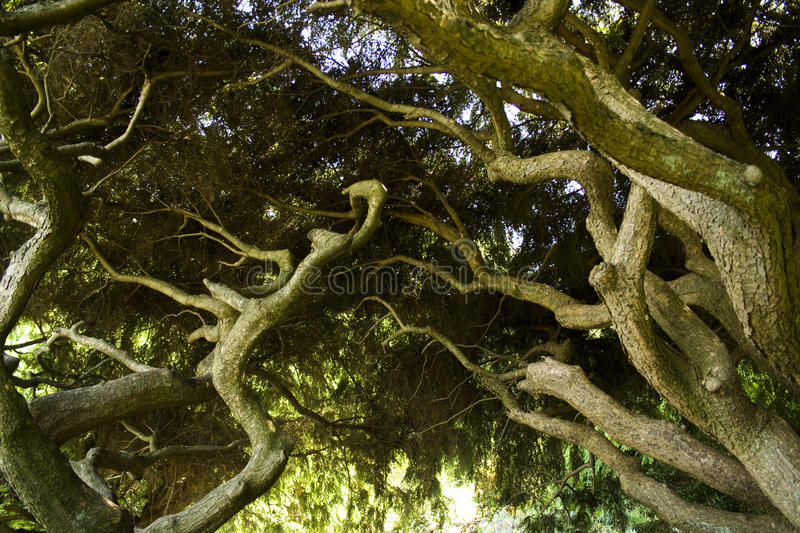 Roots royalty free stock image