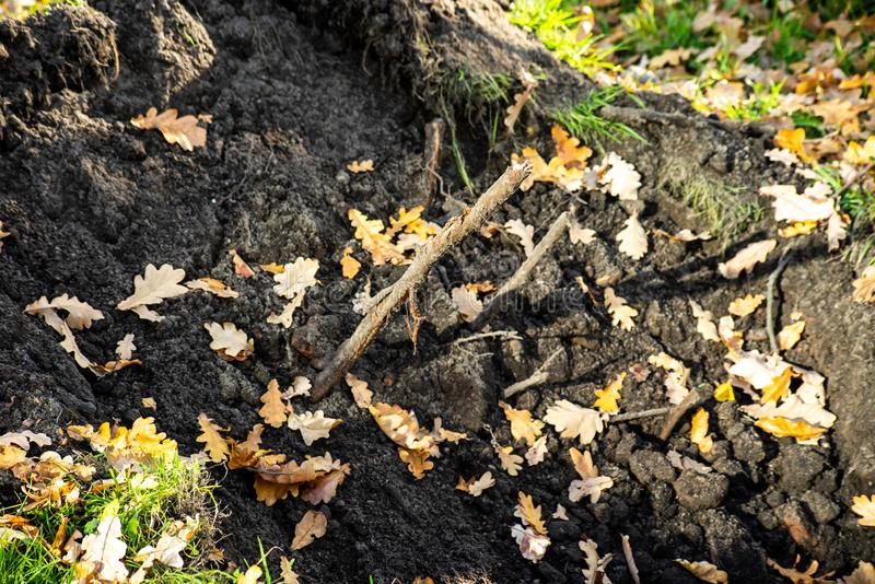 The roots dug in the ground. In bright sunlight royalty free stock images