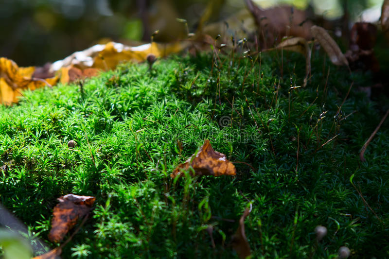 The hills are covered with moss. In mixed forest royalty free stock photos