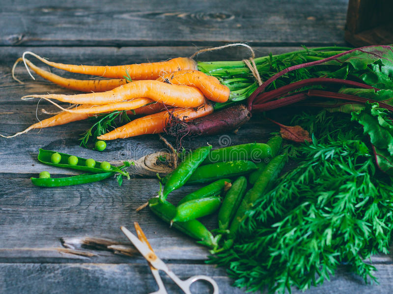 Roots, fresh vegetables, carrots, beets and peas with a pod. On a wooden background, agronomy stock photo