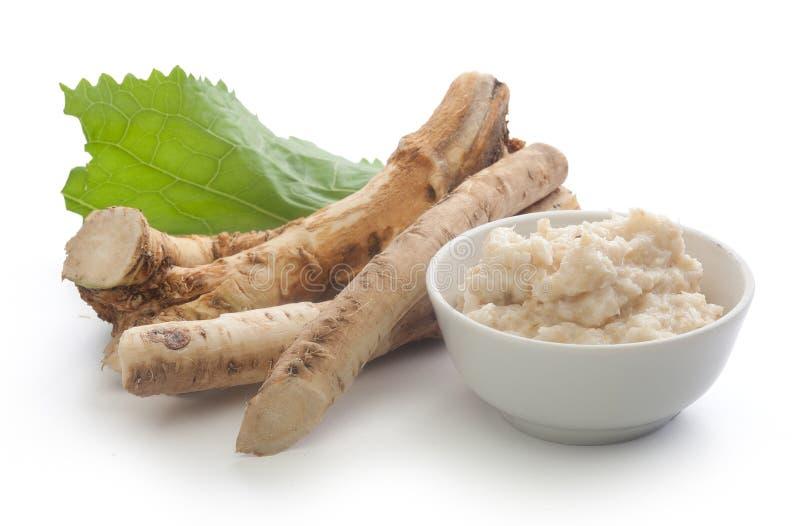 Roots of horseradish stock photos