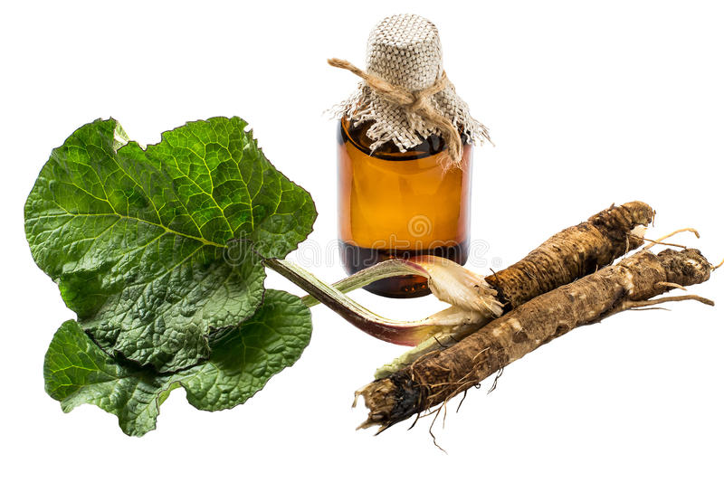 The roots and leaves of burdock, burdock oil in bottle. Medicinal plant - a burdock. The roots and leaves of burdock, burdock oil in bottle isolated on white stock photo