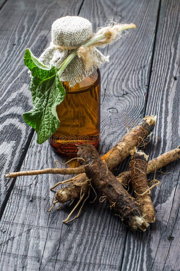 The roots and leaves of burdock, burdock oil in bottle. Medicinal plant - a burdock. The roots and leaves of burdock, burdock oil in bottle on a wooden royalty free stock photography