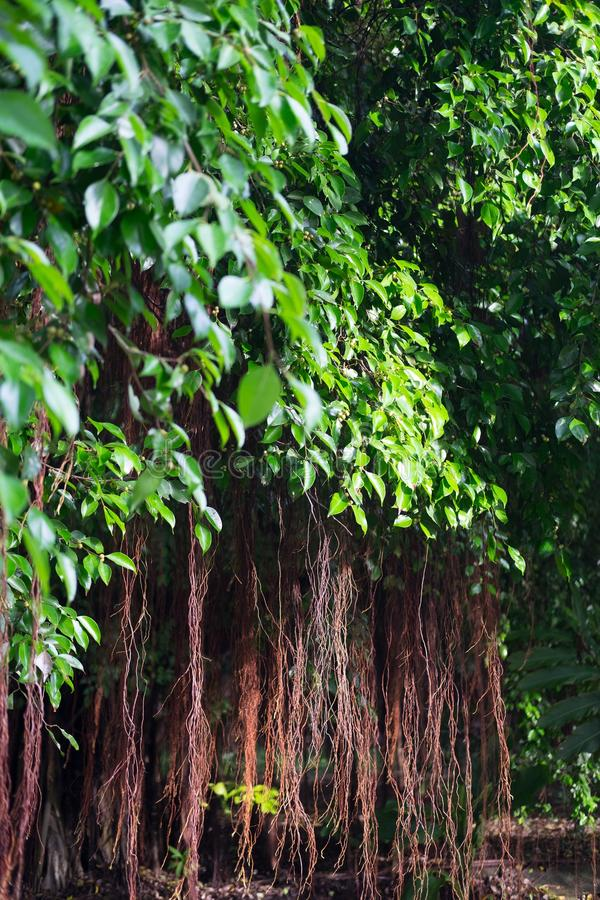Roots rotar royaltyfria foton