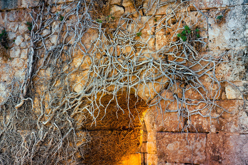 Roots & ruins royalty free stock photography